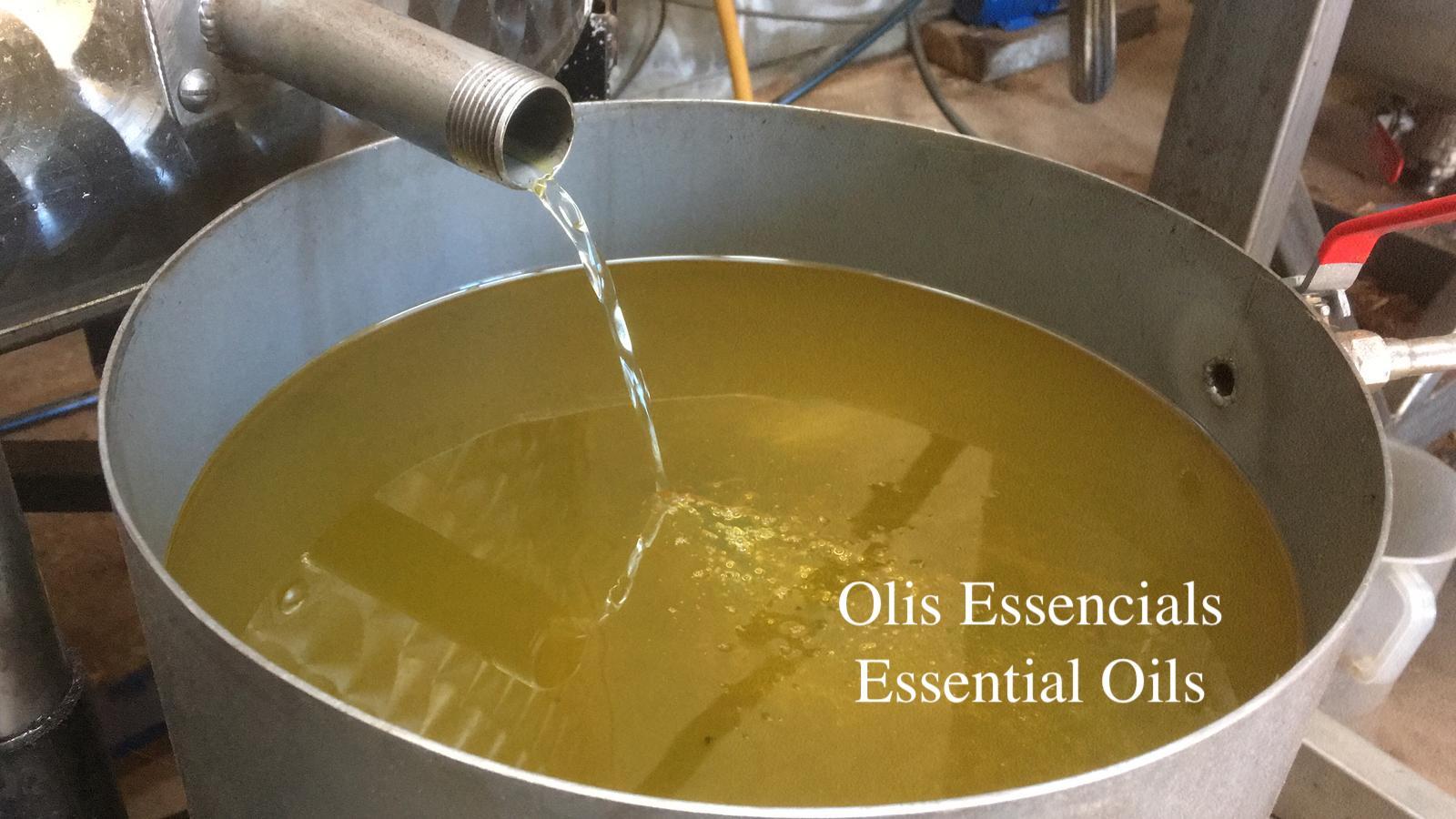 Capçalera olis